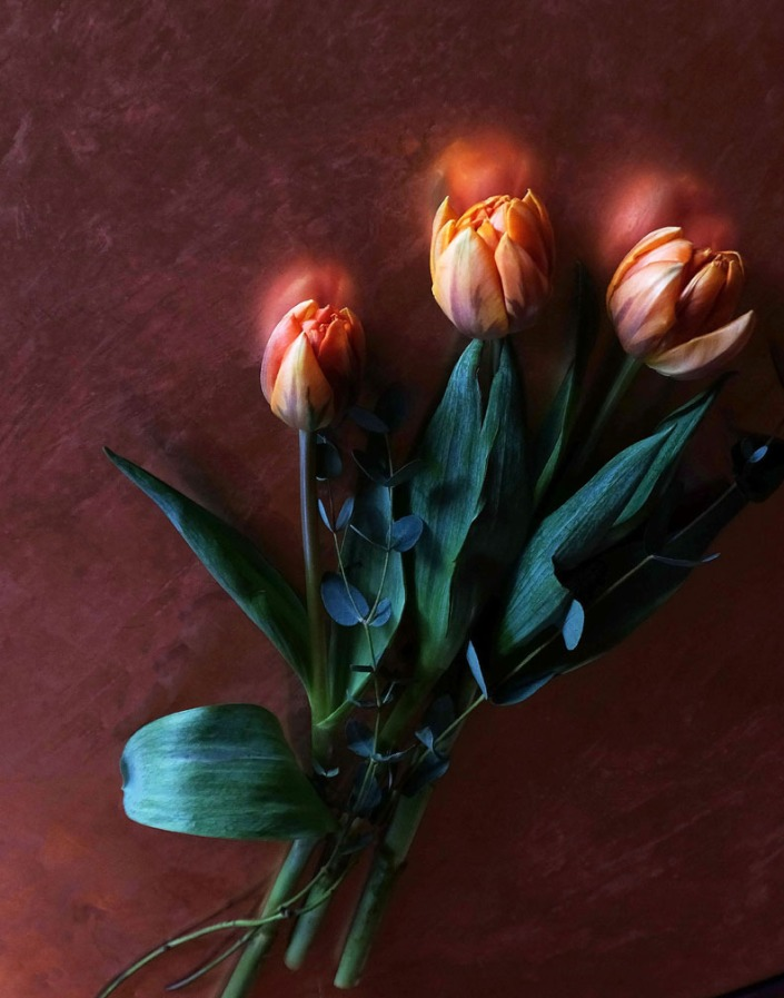 tulips-aglow-web
