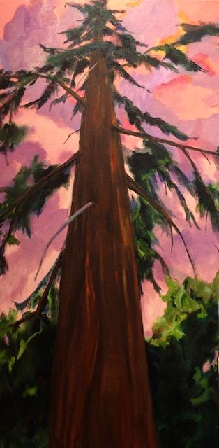 Lone Fir August Sky, oil, 24x 48