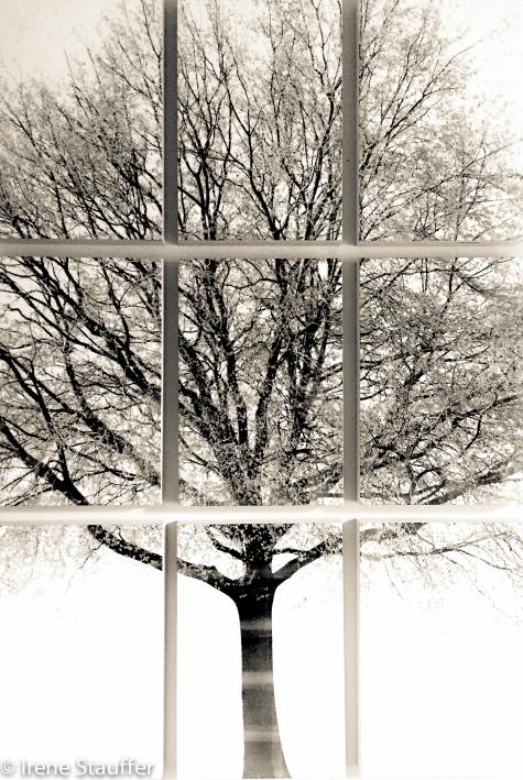 Round-Tree_Encaustic